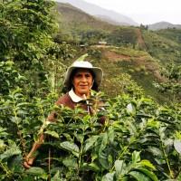 Купихме кафе номер 1 в СОЕ Перу 2019