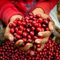 Вкусов профил на централноамериканските кафета