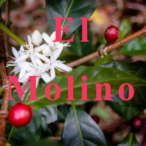 COFFEE OF JULY 2015 - El Molino 200,8 g